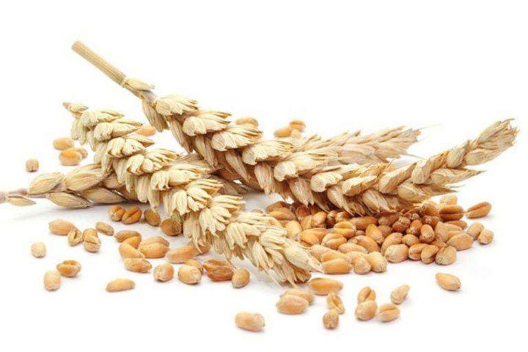Предлагаем семена яровых культур для посевной 2019 года